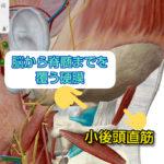 頭蓋骨へのアプローチの特徴 ~ポイントは硬膜と小後頭直筋や縫合と固有受容器~