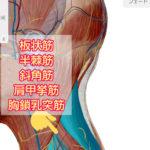 首肩のコリや痛みには頚椎と上腕骨を狙え(頚椎後側編) 図解付き