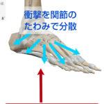 足底腱膜炎やシンスプリント、足首の痛みのポイントは足根骨の「関節と脛腓の「骨や骨間膜」