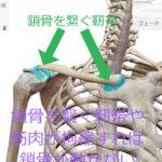肩凝り解消や呼吸を深くするために鎖骨を動かす施術