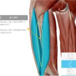 腰痛、座骨神経痛、膝の痛みの改善に悩んでいませんか?