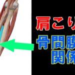 肩こりや四十肩と骨間膜との関係